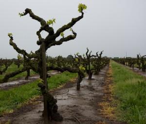 Marian's Vineyard Zinfandel