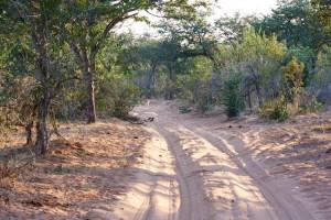 Sandy single track through Chobe National Park