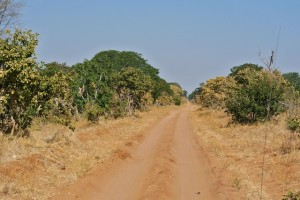 Red dirt single track through Chobe National Park